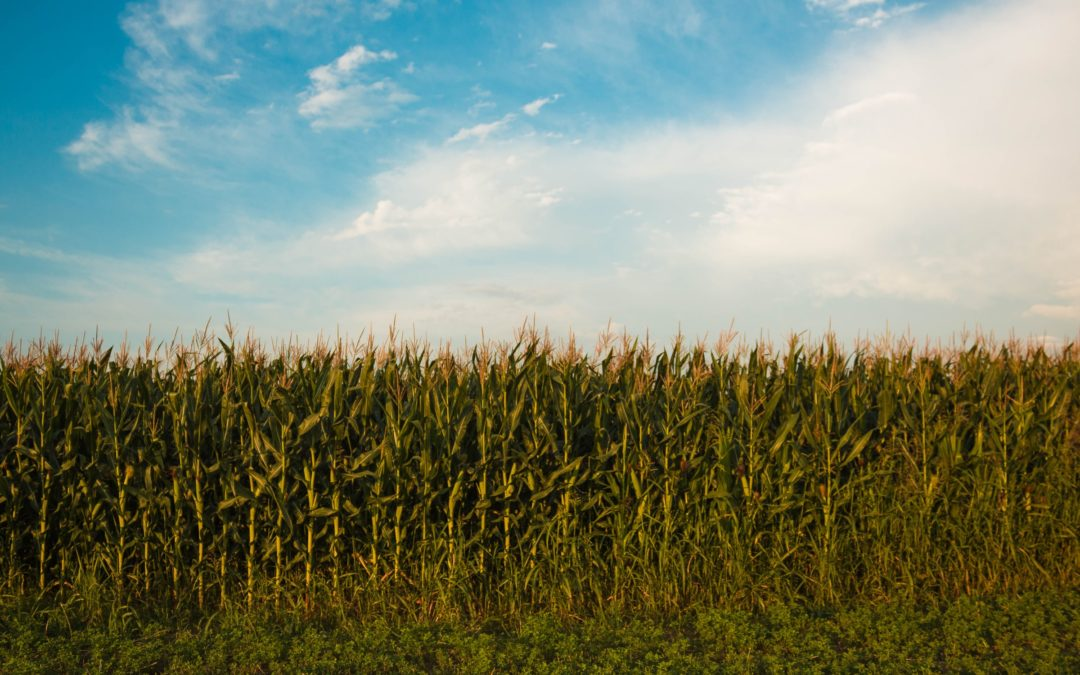 Applying Nutrients at the Right Rate Leads to Increased Economic and Agronomic Productivity