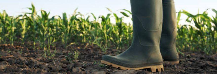 The importance of using the Right Source for fertilizer needs